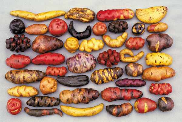 http://www.realclearscience.com/blog/2012/03/ode-to-the-potato.html
